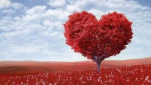 13. Princípio do Amor